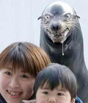 scary seal