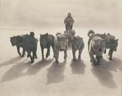Huskies pulling sledge