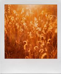 Polaroid SLR690
