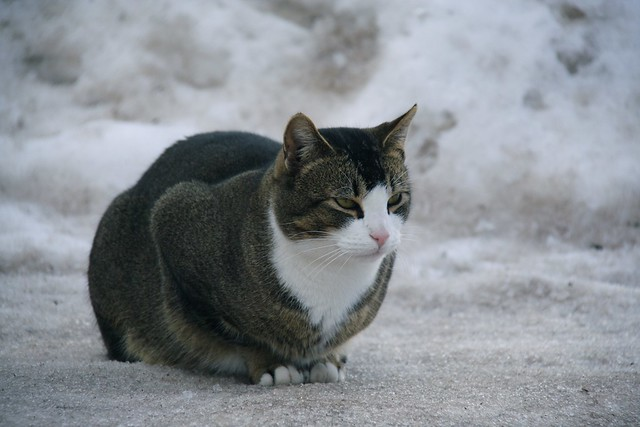 unhappy cat at -25 | Flickr - Photo Sharing!
