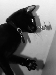 Diesel Playing With A Moth