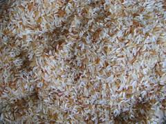 Rice [01]