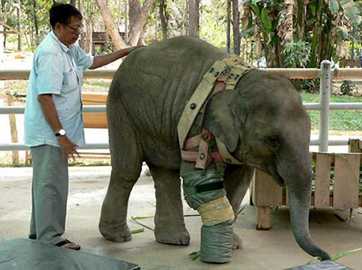 THAILAND ELEPHANT MINE VICTIM