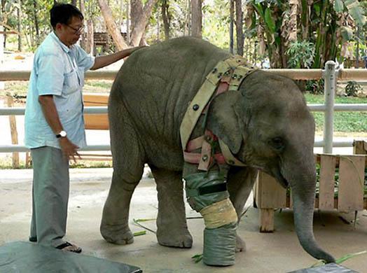 THAILAND ELEPHANT MINE VICTIM