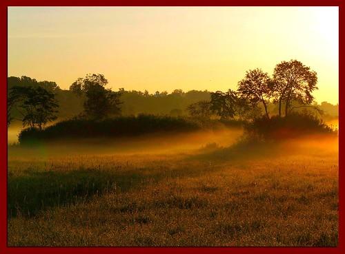 morning trees mist tree misty fog sunrise landscape foggy puu puud morningfog hommik udu mistysunrise maastik foggysunrise päikesetõus olympuse400 abigfave welcometoestonia theunforgettablepictures janne4janne udunepäikesetõus vanagram udune obq goldenvisions