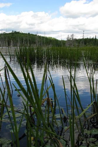 ontario canada grass geotagged pond lilypad beaverpond birchlake webbwood vacation200807 geo:lat=4631501100 geo:lon=8189751500