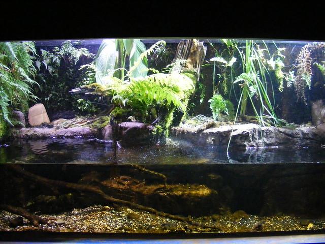 Beautiful Fish Tank Flickr - Photo Sharing!