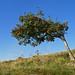 Wind shaped by randihausken