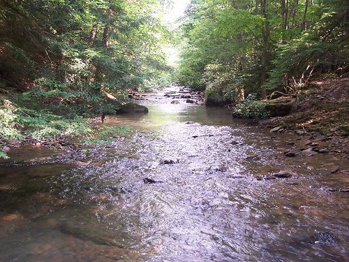 Holly river west virginia 2 flickr photo sharing for Elk river wv trout fishing