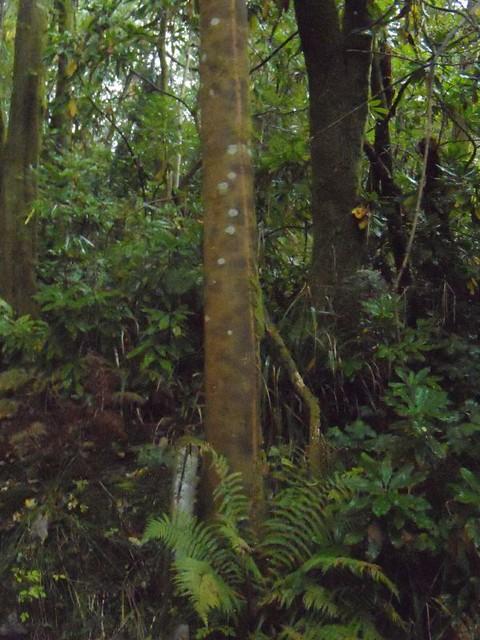English rain forest