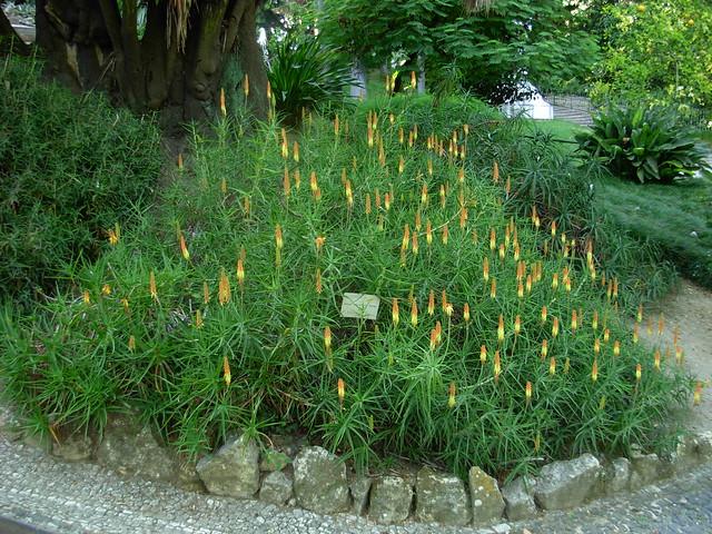 pedras jardim botanico:Aloe Striatula