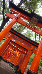 Row of Torii