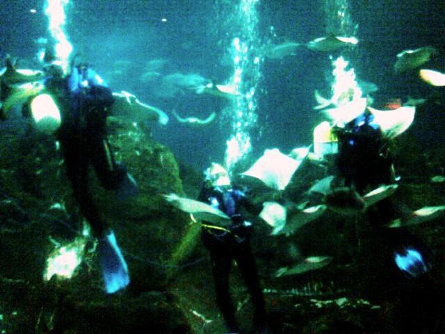 Adventure Aquarium Camden Nj 07 28 2008 Flickr Photo