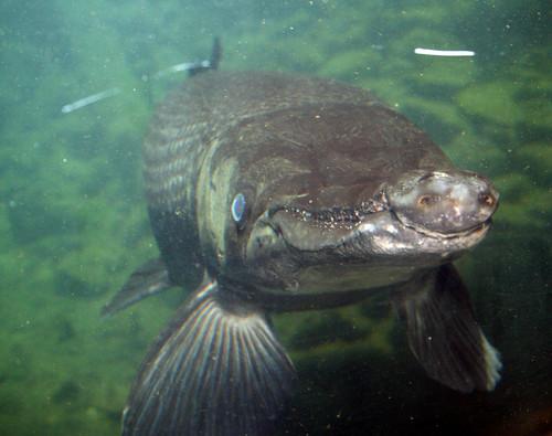 2008 07 25 athens tx freshwater fish hatchery 2972 for Fish hatchery texas