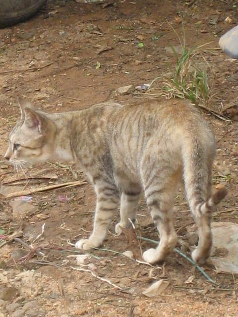 fresh step multi cat litter