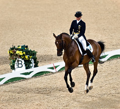 western riding(0.0), modern pentathlon(0.0), racing(0.0), eventing(0.0), stallion(0.0), animal training(0.0), endurance riding(0.0), mustang horse(0.0), animal sports(1.0), equestrianism(1.0), english riding(1.0), dressage(1.0), mare(1.0), jumping(1.0), show jumping(1.0), hunt seat(1.0), equestrian sport(1.0), sports(1.0), western pleasure(1.0), recreation(1.0), outdoor recreation(1.0), equitation(1.0), horse harness(1.0), jockey(1.0),