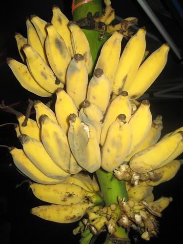 How Do Banana and Plantains Compare as Antioxidant Fruits?