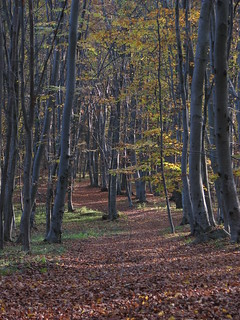 Faget forest