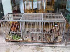 cage, iron, animal shelter,