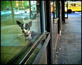 that doggie in the window... how much?
