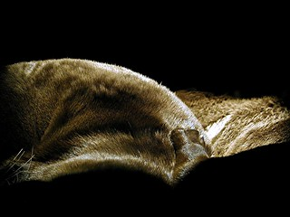 Otters sleeping like rolling hills