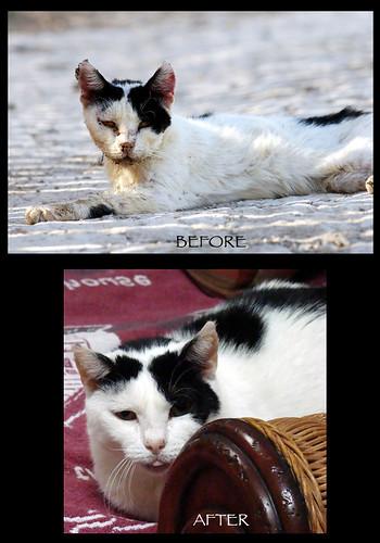 rescue cat photo feline kitty bestfriends covergirl pahrump photoschmuck thepoweroflove photobytroysnow