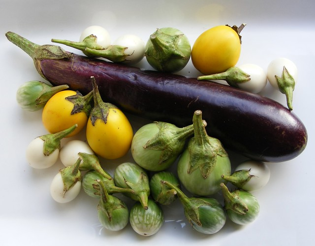 Gekleurde, Thaise ei aubergines