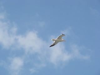 Image de Koules près de Dimos Heraklion. eagle creta greece heraclion κρήτη ελλάδα koule ηράκλειο κούλε γλάροσ
