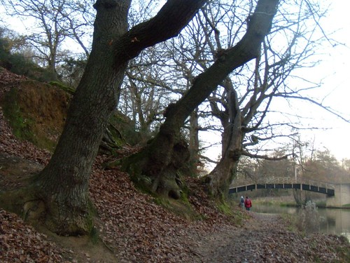 Trees by the Wey