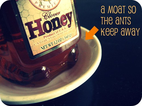 How to keep ants away from honey wifely steps - Keep ants away in simple ways ...