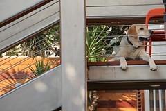 Exterior Stairs Detail with Labrador Retriever