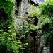 19 mai 2008 Vitré Promenade sous les murs du château Vieilles pierres au milieu de la verdure (2) ©melina1965
