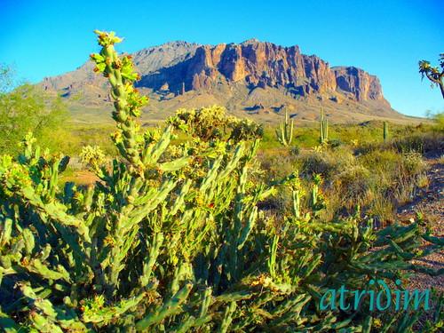 arizona cactus mountains cacti photo flickr desert cholla apachetrail superstitionwilderness superstitionmountain tontonationalforest atridim