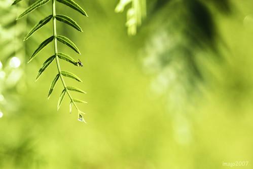 park morning summer macro tree nature leaves canon photography virginia fly bokeh v droplet rebelxt morningwalk virgie 100mmmacro hbw bokehlicious pinoykodakero imago2007 bokehwednesday litratistakami
