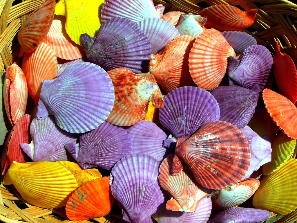 Multicolored shells