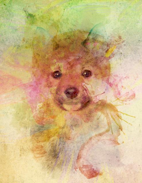 Kiba - Watercolor of a Shiba Inu
