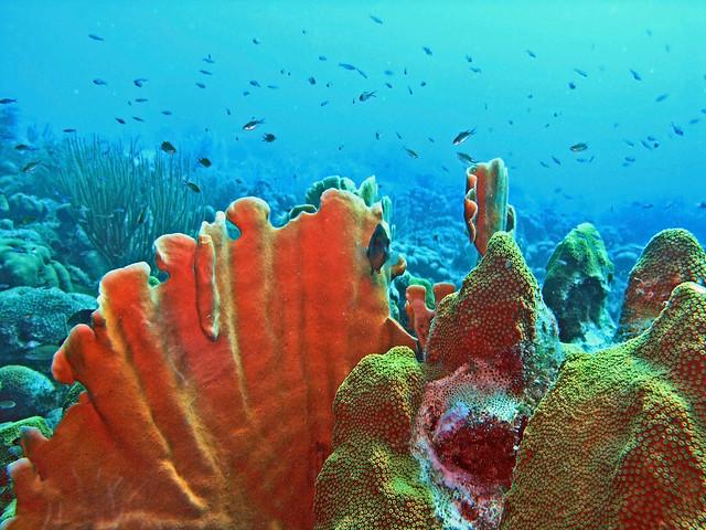 coral garden in Bonaire