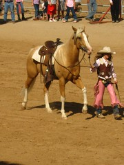 animal sports, equestrianism, western riding, mare, equestrian sport, sports, western pleasure, pack animal, reining, horse, horse harness, traditional sport,