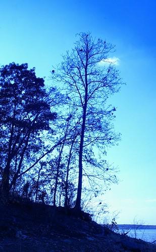 autumn treesclintonlake