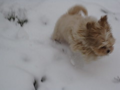 Puppy and Snow COMBINED