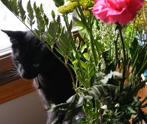 Blitzen hides behind the bouquet of flowers
