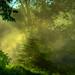 Summer Spruce on Misty Morning by Brian D. Tucker
