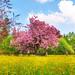 Pink tree by Tambako the Jaguar