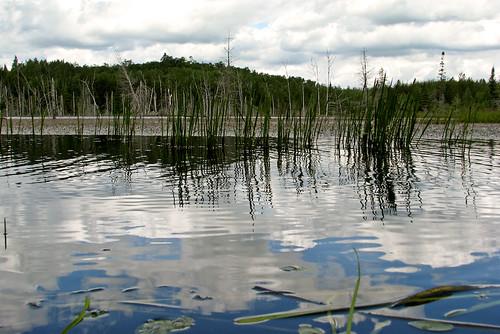 ontario canada geotagged pond beaverpond birchlake webbwood vacation200807 geo:lat=4631499700 geo:lon=8189748300