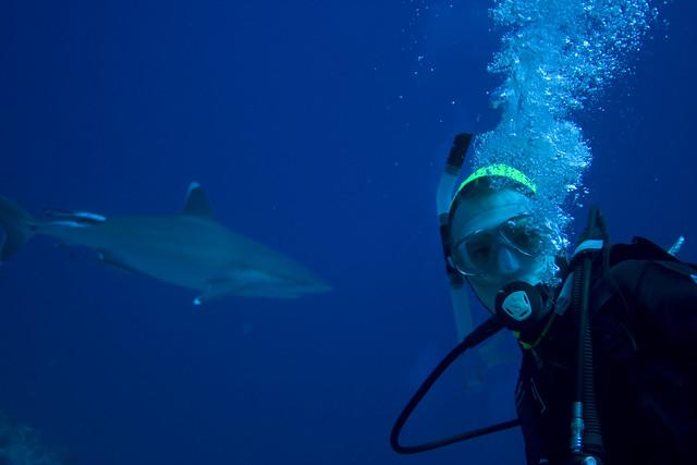 Spent dykker med Silvertip Shark i bakgrunnen, Osprey Reef, Australia