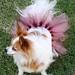 Dog Tutu Pink-Brown