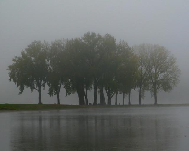 Gray's Lake Grove-Pre-Dawn Fog
