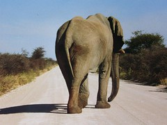 Namibia-Fotosafari 04