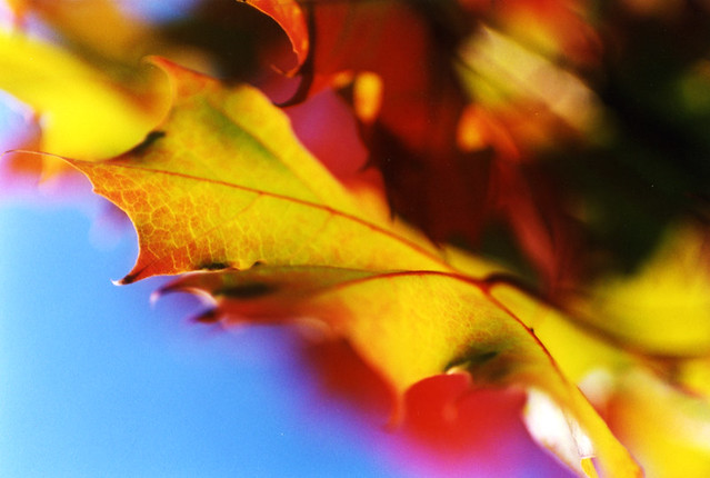 leaves, Pentax K1000