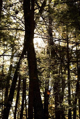 trees fall nature nikon d40 valkill d40x